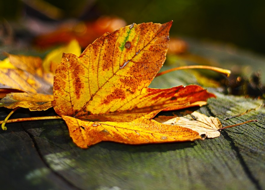 Đọc những Stt mùa thu lá vàng rơi khiến em nhớ anh, nhớ kí ức của hai ta