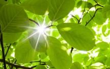 Những stt về nắng mang lại nhiều niềm cảm xúc và niềm vui tràn ngập yêu thương