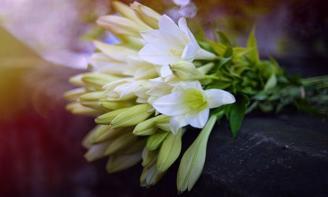 Status yêu thương Tháng 4 vừa đến mang theo mùa loa kèn trắng tinh khôi