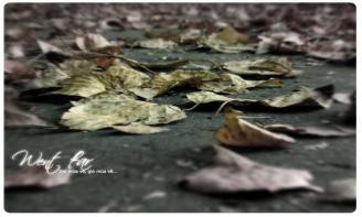 Những status mang tâm trạng  xao xuyến khi gió mùa về