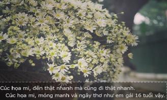 Những stt hay nhất về cúc họa mi - loài hoa trắng tinh khôi đầy cuốn hút