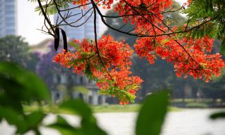 Ngày tháng 5, ngày mùa hè đến gắn liền với mùa yêu đầu. Ta gặp người vào một ngày đầy nắng, nụ cười ngập nắng ấy, ánh mắt ấy đã làm trái tim ta xao xuyến mãi. Giấu chút buồn sâu trong đáy mắt, là vương vấn cho những yêu thương ấp ủ chẳng dám thành lời. Thứ tình cảm trong veo không đầu, không cuối ấy cứ thế mãi chẳng nên lời. Chùm hoa đỏ người tặng, ta gom góp lại mang cả một trời hoa đỏ đặt vào màu mắt ấy.