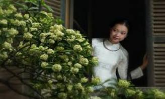 Mùa hoa sữa về với những status chất chứa yêu thương